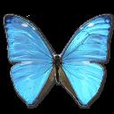 Morpho-Adonis-Huallega-Top-icon